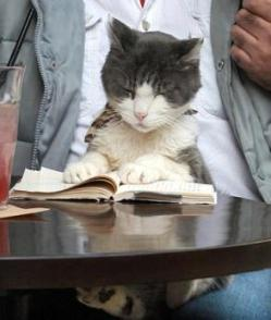 cat_reading_book.jpg